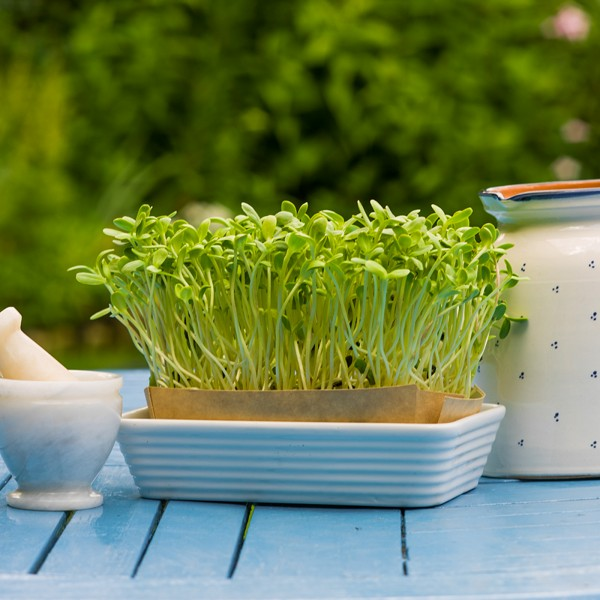 Słonecznik BIO - Zestaw do samodzielnej uprawy