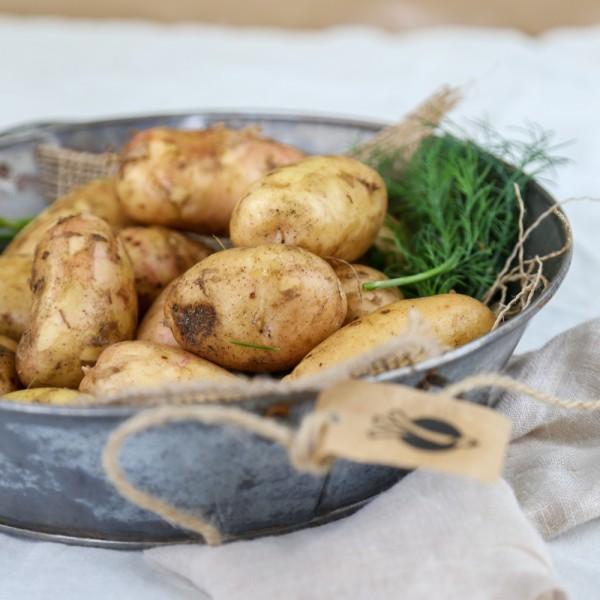 Ziemniaki młode Denar EKO